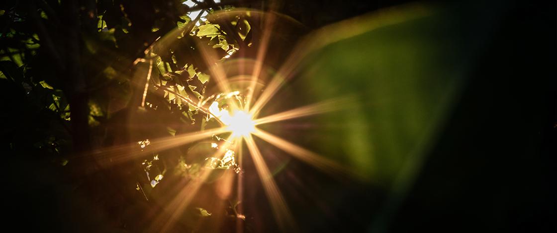 Sonnenstrahlen durchbrechen den Blätterwald