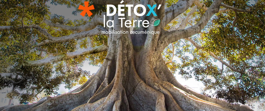 Agenda DetoxTerre2