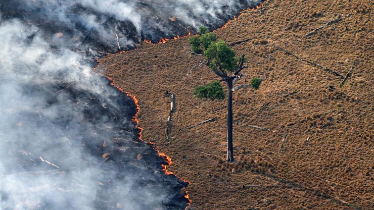 Der Amazonas brennt.