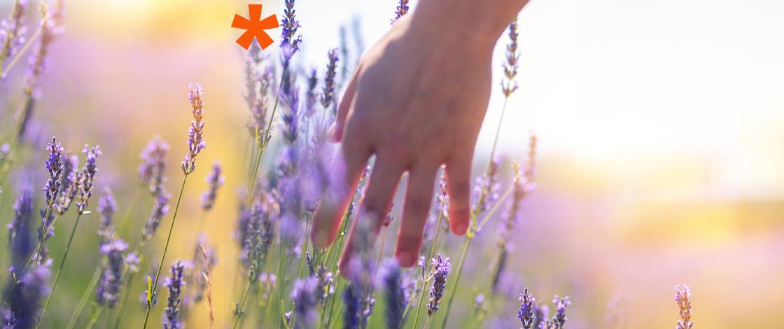 Hand in Lavendelfeld