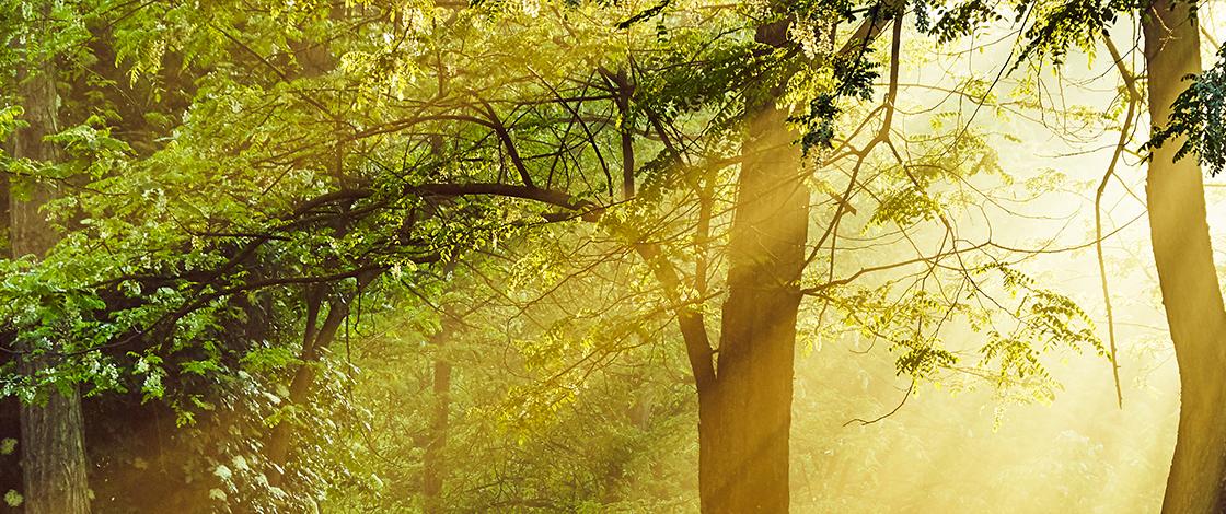 Ostern, Frühlingswald